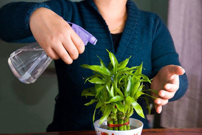 indoor-plants-easy