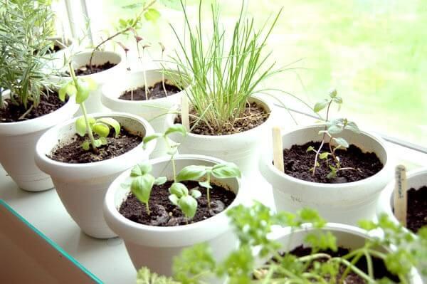 indoor-plants-food